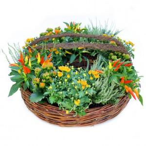 Kranz als Pflanzkorb mit Zierpaprika und Herbstblumen (65 cm ø)