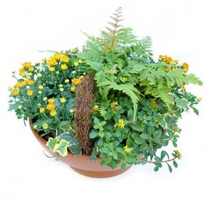 Pflanzschale mit Chrysanthemen, ø 45 cm