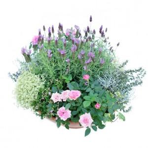 Pflanzschale Lavendel, ø 45 cm